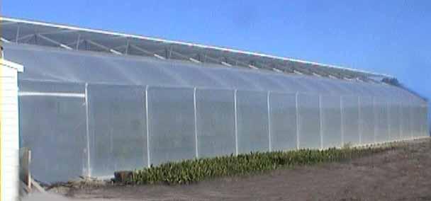 Hydroponics1 on Diy Greenhouse Plans